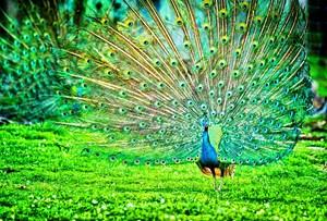Vẻ đẹp loài chim