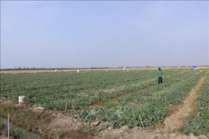 Thay đổi cây trồng để thích ứng với khô hạn