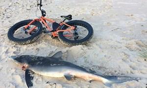 Xác cá mập xanh dạt vào bờ biển Scotland