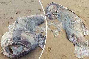Xác 'quái vật' biển nặng 1,5 tạ trôi dạt vào bờ biển Australia