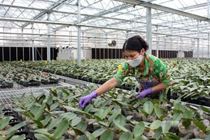 Xây dựng 26 mô hình nông nghiệp ứng dụng công nghệ cao