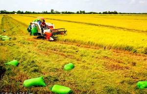 Xây dựng mô hình HTX kiểu mới ở Trà Vinh: Sinh khí mới thúc đẩy tam nông