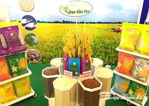 Xây dựng quy chế nhãn hiệu quốc gia cho gạo Việt