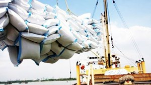 Thủ tướng đồng ý xuất khẩu gạo trở lại nhưng phải đảm bảo an ninh lương thực