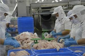 Xuất khẩu cá tra : Thị trường Trung Quốc tăng,  EU sụt giảm