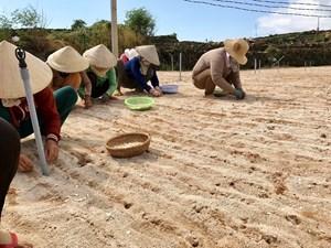 lý sơn (Quảng Ngãi): Nan giải việc xử lý đất thải nông nghiệp