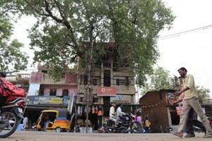 Ngôi nhà xây quanh thân cây khổng lồ 150 năm tuổi