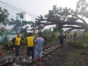 Đường sắt Bắc - Nam tê liệt nhiều giờ do cây đổ chắn ngang đường ray