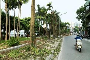 Ứng xử với cây xanh Hà Nội: Không thể tùy tiện