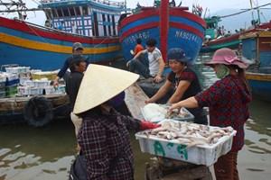 [ẢNH] Ngư dân trúng đậm mẻ cá hàng trăm triệu đồng