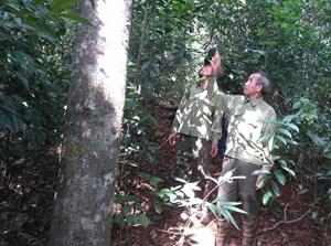 Áp lực nghề giữ rừng