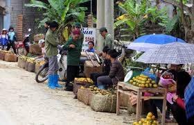 Bắc Kạn: Từng bước xây dựng thương hiệu nông dân sản xuất hàng hóa đặc trưng