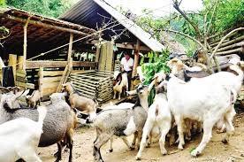 Bắc Kạn cần tập trung phát triển nông nghiệp, giúp dân thoát nghèo