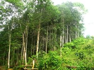 Bằng Thành (Pác Nặm, Bắc Kạn): Hiệu quả cao từ kinh tế rừng
