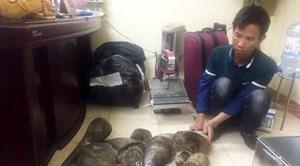 Bắt đối tượng cầm đầu đường dây buôn bán động vật hoang dã