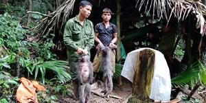 Bắt giữ nhóm thợ săn vào Vườn quốc gia bắn voọc xám