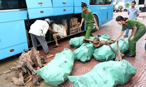 Bắt quả tang xe khách chở 9 bao tải gỗ trắc