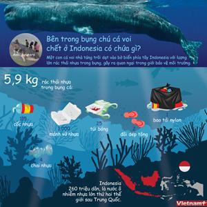 Bên trong bụng chú cá voi chết ở Indonesia chứa những gì?