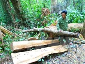 Bình Định: Bắt tạm giam đối tượng chủ mưu vụ phá rừng phòng hộ