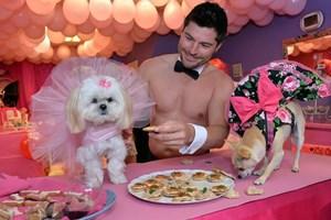 Chi 6.000 bảng Anh để tổ chức tiệc cho cún cưng