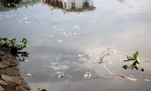 Cá chết bốc mùi hôi thối ở hồ điều hòa gần trường học