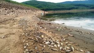 Cá chết bốc mùi hôi thối ở hồ thuộc tỉnh Quảng Nam