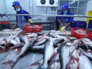 Cá da trơn Việt Nam tiếp tục có cơ hội sang thị trường Mỹ