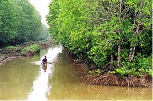 Cà Mau: Phát huy thế mạnh nuôi tôm sinh thái