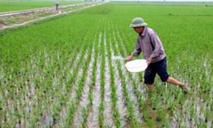 Các tỉnh phía Bắc tập trung sản xuất vụ Đông Xuân