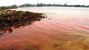 Các vệt nước màu đỏ tại Chân Mây-Lăng Cô (Huế): Do tảo nở hoa