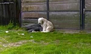 Cảm động chú chó ngồi đợi chủ đã mất suốt 5 năm