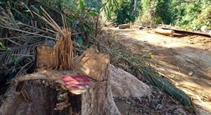 Cần điều tra làm rõ vụ phá rừng ở Nam Giang