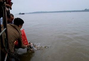 Cần làm rõ xuất xứ của 10 tấn cá