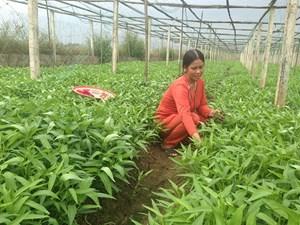 Cần Thơ: Phấn đấu trồng 850.000 cây xanh