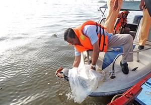 Cần Thơ: Thả hơn 3 tấn cá bản địa tái tạo nguồn lợi thủy sản