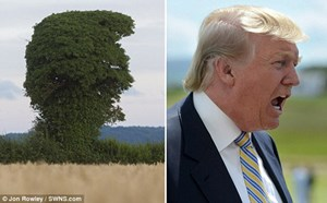 Cây có hình dạng giống hệt tỷ phú Trump đang gào hét