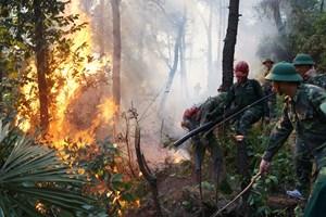 Cháy rừng, chuyện không của riêng ai