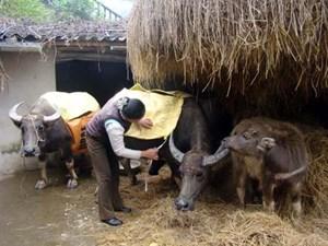 Chăm sóc vật nuôi trong mùa lạnh