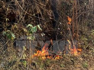Cháy rừng keo ở Cẩm Phả, đe dọa nhiều ha rừng