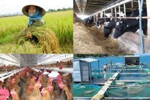 Đối tượng hưởng chính sách hỗ trợ phí bảo hiểm nông nghiệp