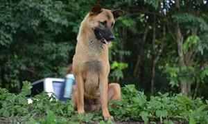 Chú chó ngồi vệ đường đợi chủ suốt 1 năm