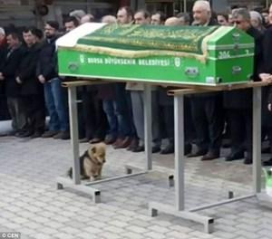 Chú chó trung thành không rời mộ người chủ qua đời
