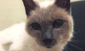 Chú mèo chết ngay sau khi lập kỷ lục Guinness