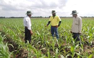 Chuyển đổi 151ha đất trồng lúa sang trồng màu