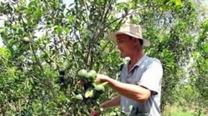Chuyển đổi cây trồng ở Trà Vinh:  Hiệu quả kinh tế cao