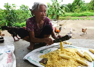 'Chuyện làng Nhô' ở Đắk Lắk - Bài cuối: Nhờn thuốc do được bao che