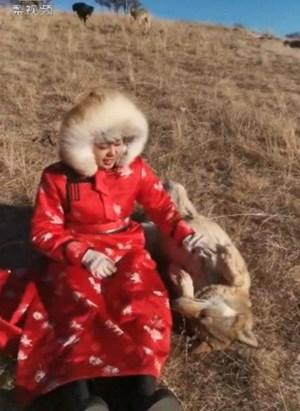 Cô gái 20 tuổi làm bạn với loài sói
