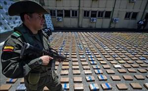 Colombia tịch thu gần 1,7 tấn cần sa