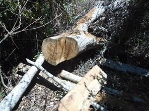 Cửa rừng đóng nhưng chưa 'khóa'