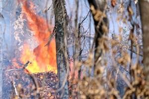 Đã khống chế được cháy rừng ở Kỳ Sơn